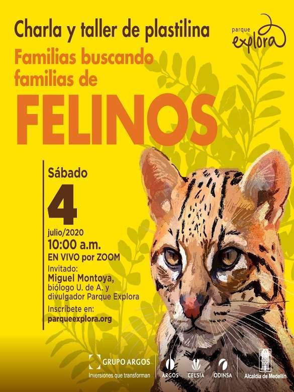 Participa en la charla y taller de plastilina 'Familias buscando familias de felinos'